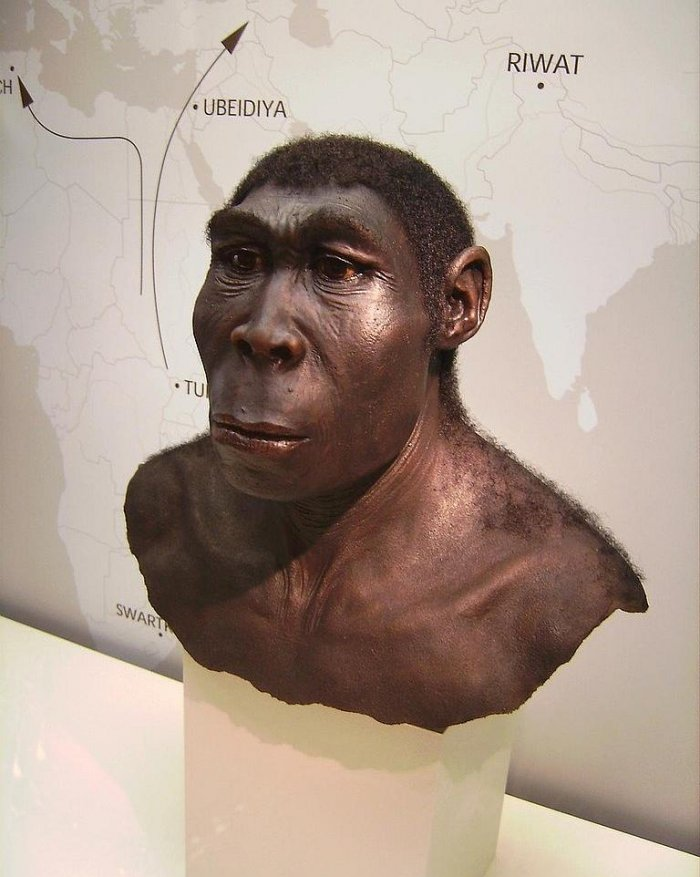 vývoj člověka: Homo erectus (Scientific discoveries, CC BY-SA 2.0)