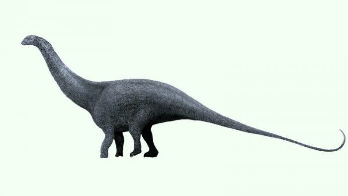 Famous dinosaurs: Brontosaurus excelsus (reconstruction: Tom Parker, CC BY-SA 4.0)